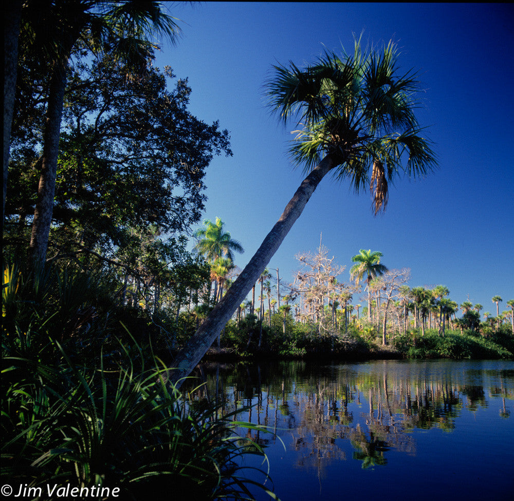 palm tree water lake florida state park beautiful reflection photography James Valentine