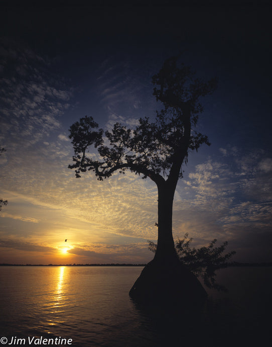 Sunset over Lake with Cypress Tree James Valentine Photographer