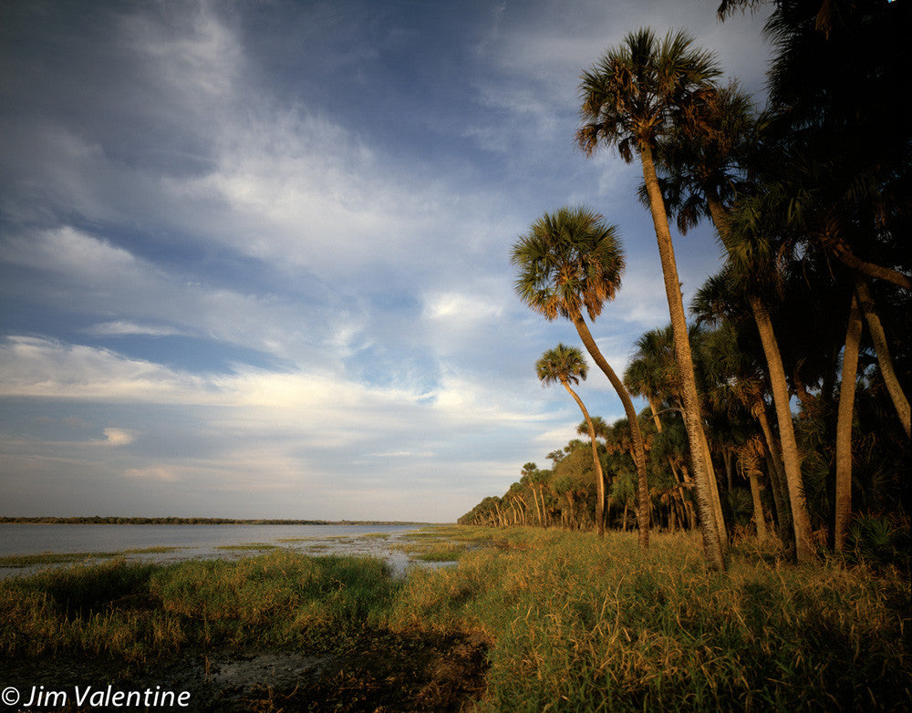 manatee river palm trees dusk sunset shadows florida state parks nature wildlife photography