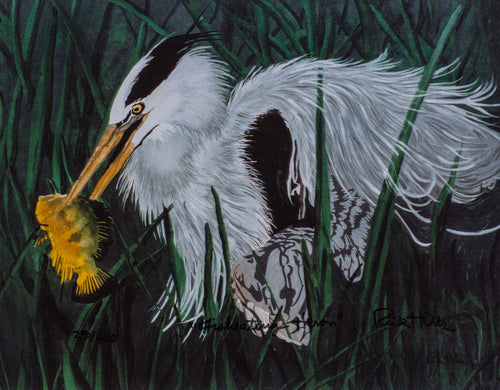 *Hills, Rick ''Fish-eating Heron '' Signed & Numbered Limited Edition 10.75x13.5