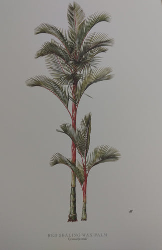 Peebles, Diane Red Sealing Wax Palm Print