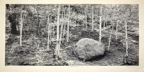 A black and white photograph of the woods featuring several birch trees and a large rock.