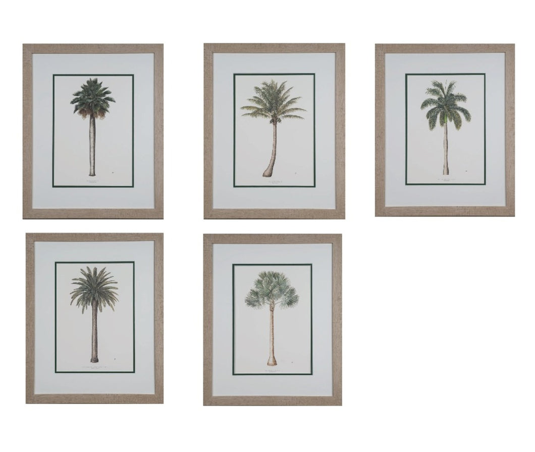 Peebles, Diane - Set of 5 Botanical Palm Trees - 14 x 10