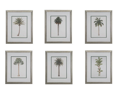 Peebles, Diane Set of 6 Palm trees 26''x18''