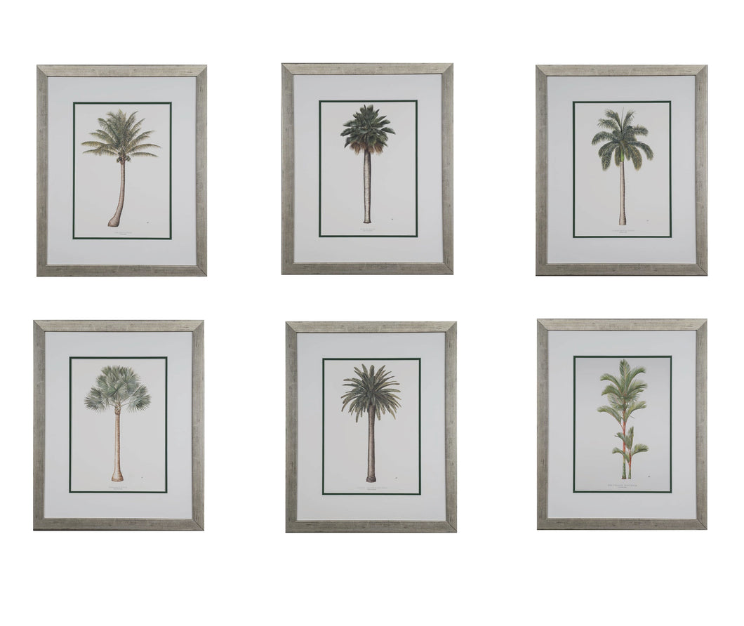 Peebles, Diane - Set of 6 Botanical Palm Trees - 26 x 18 Also Available Matted and Framed