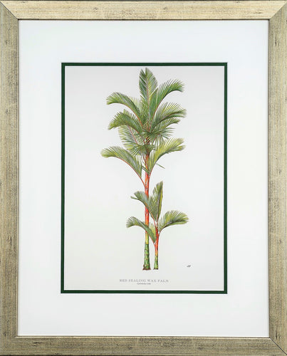 Red Sealing Wax Palm - by artist Peebles, Diane