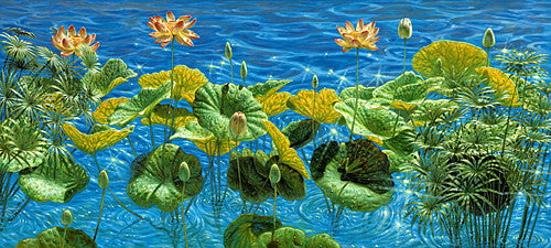 Water flowers Frog Lily pads