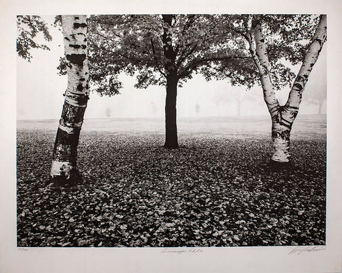 A black and white nature photograph of birch trees in the fog.