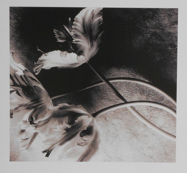 Sehmaltz-Joanne-Les-Tulipes-II-13x12-BSL-0188-Offset-Lithogram-on-Paper-list-20-our-16-e1449070312334.jpg