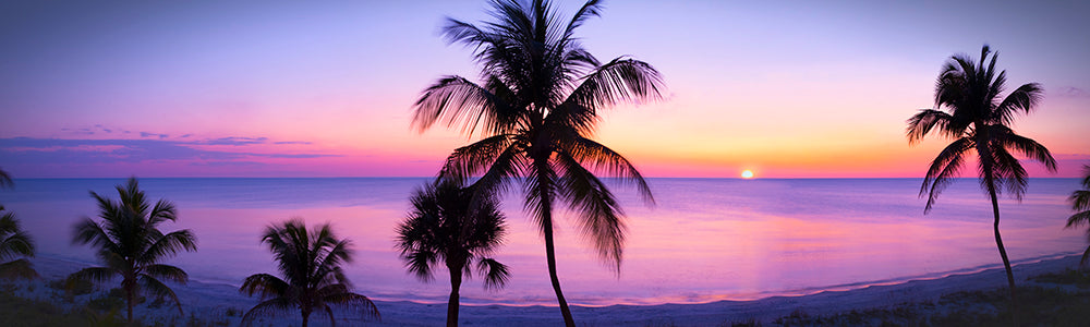 Panoramic tropical Florida Sunset Palm lined beach Blues Purples yellows