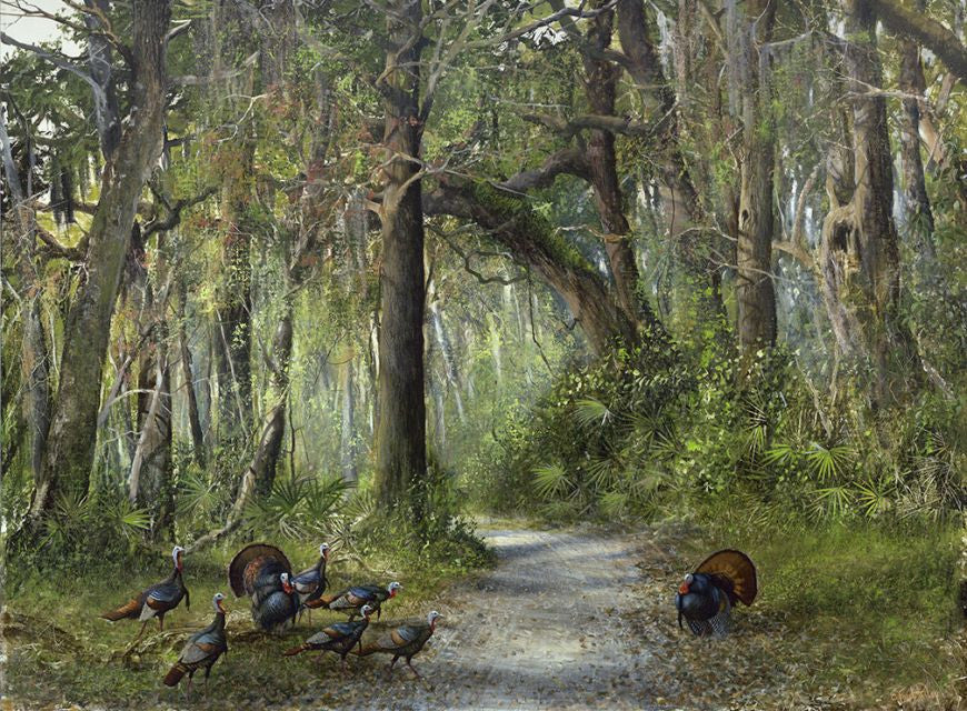 riley, seven north art, painting, print, birds, nature, woods
