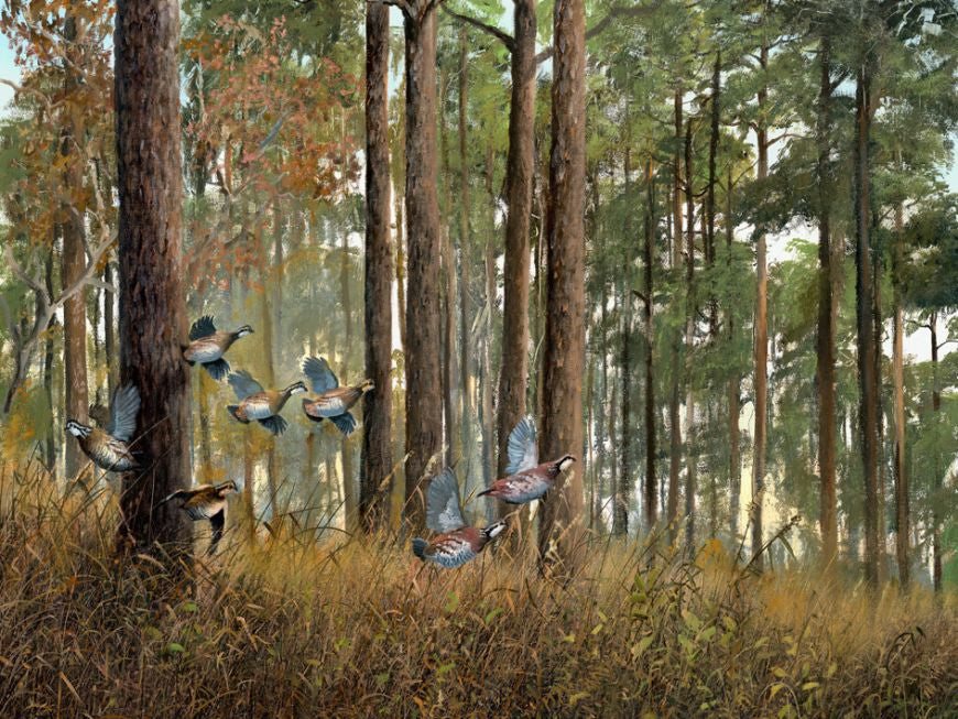 riley, seven north art, painting, print, birds, nature, woods, trees