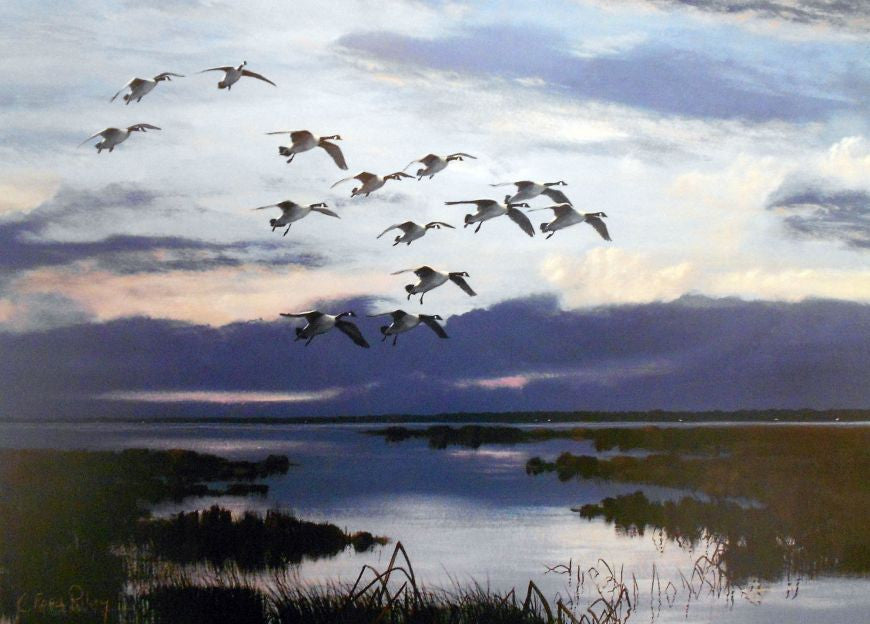 riley, seven north art, painting, print, birds, nature, woods, lake, river, marsh, sunset