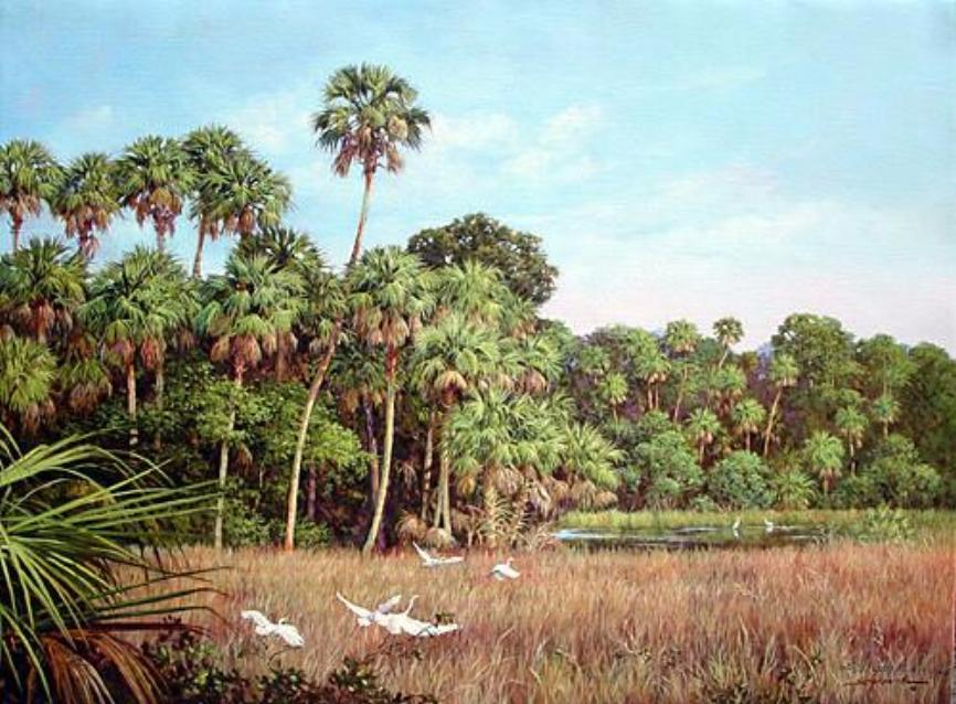 Birds Marsh Lands Palms and Pine Trees