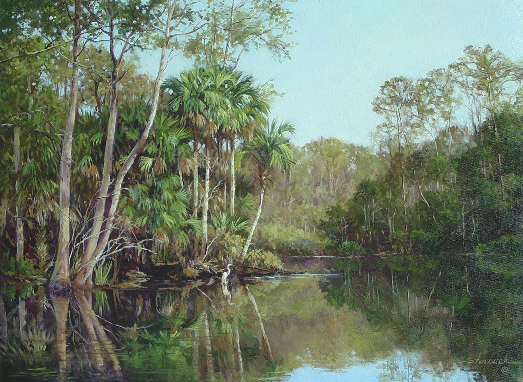 Starbuck, marsh, swamp, everglades, florida, seven north art, water, lake, river