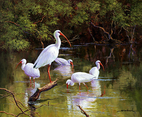 Starbuck, marsh, egret, birds nature swamp, everglades, florida, seven north art, water, lake, river