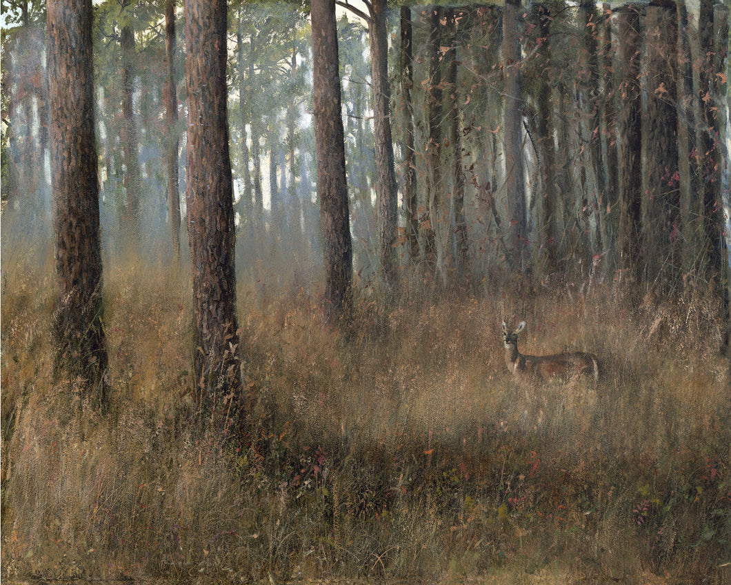 riley, seven north art, painting, print, deer, nature, woods, tree