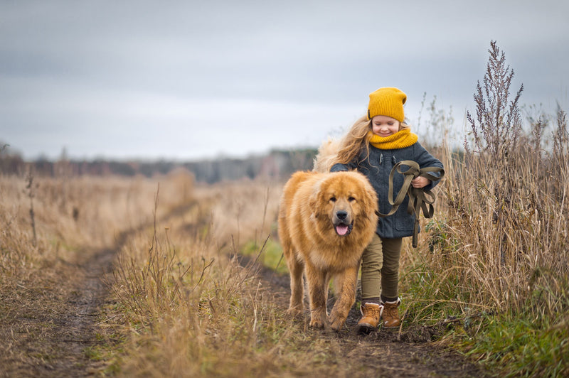Dog with Little Girl
