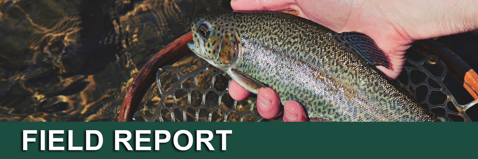 Pennsylvania Fishing Report | Yellow Breeches Creek (July 2018)