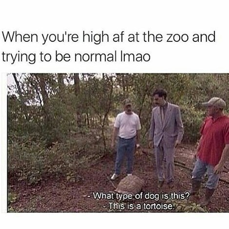When the weed hit at a zoo meme