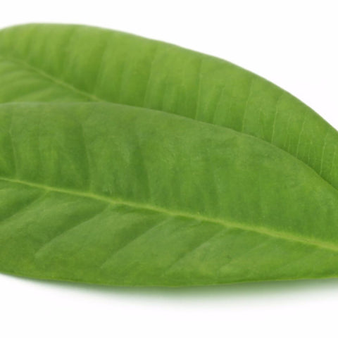 NoblePure™ Clove Leaf Essential Oil - Noble Roots