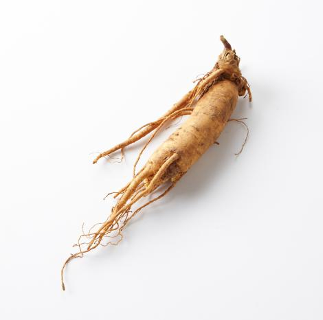 NobleEssence™  Ginseng Extract GL - Noble Roots