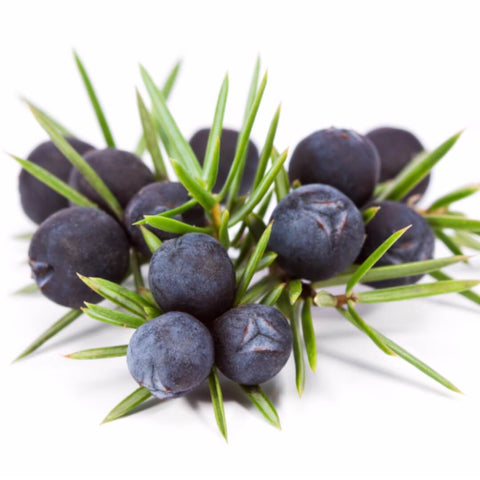 NobleScent™ Juniper Berry Natural Fragrance Oil (10% EO, 10% EX) - Noble Roots