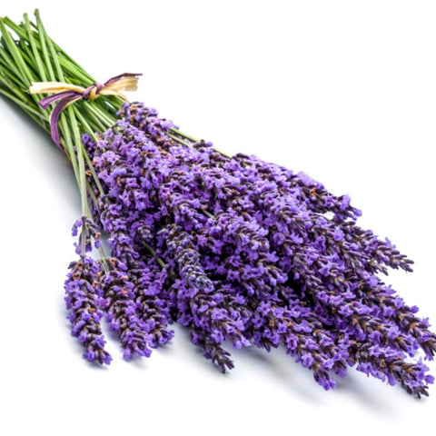 NoblePure™ Lavender Essential Oil - Noble Roots