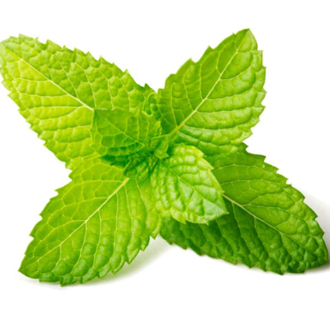 NoblePure™ Peppermint Essential  Oil - Noble Roots