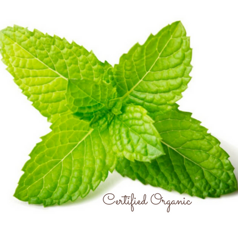 Peppermint Oil Certified Organic (Clearance) - Noble Roots