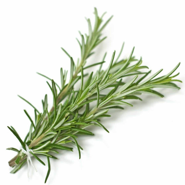 NobleScent™ Rosemary Natural Fragrance Oil (10% EO, 10% EX)