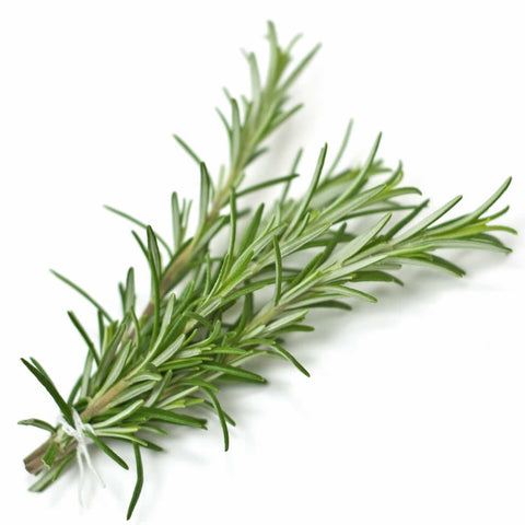 NoblePure™ Rosemary Essential  Oil - Noble Roots