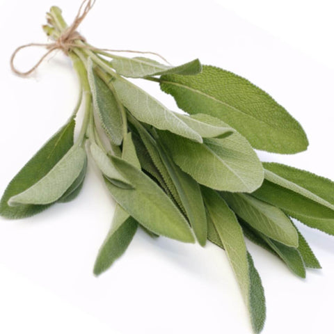 NobleScent™ Sage Natural Fragrance Oil (10% EO, 10% EX) - Noble Roots