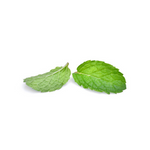 NoblePure™ Spearmint Essential Oil - Noble Roots