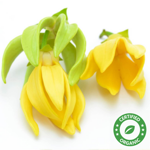 Ylang Ylang OIl (Certified Organic) - Noble Roots