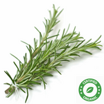 Rosemary Oil (Certified Organic) - Noble Roots