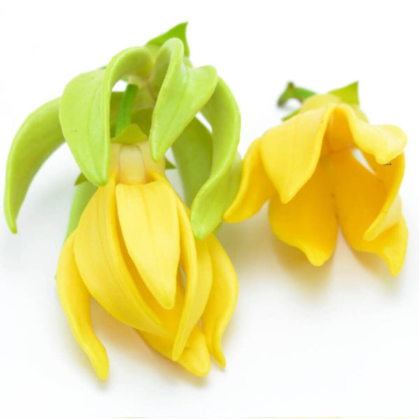 NoblePure™ Ylang Ylang Essential Oil, Complete