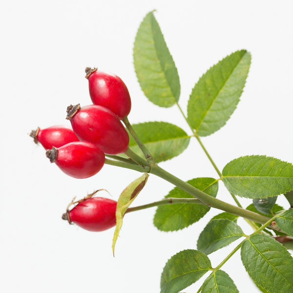 NobleEssence™ Rose Hip GL