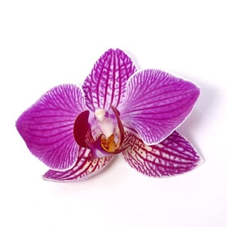 NobleScent™ Pink Orchid (Clearance) - Noble Roots
