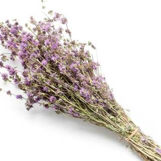 NobleScent™ Pennyroyal Natural Fragrance Oil (10% EO, 10% EX) - Noble Roots
