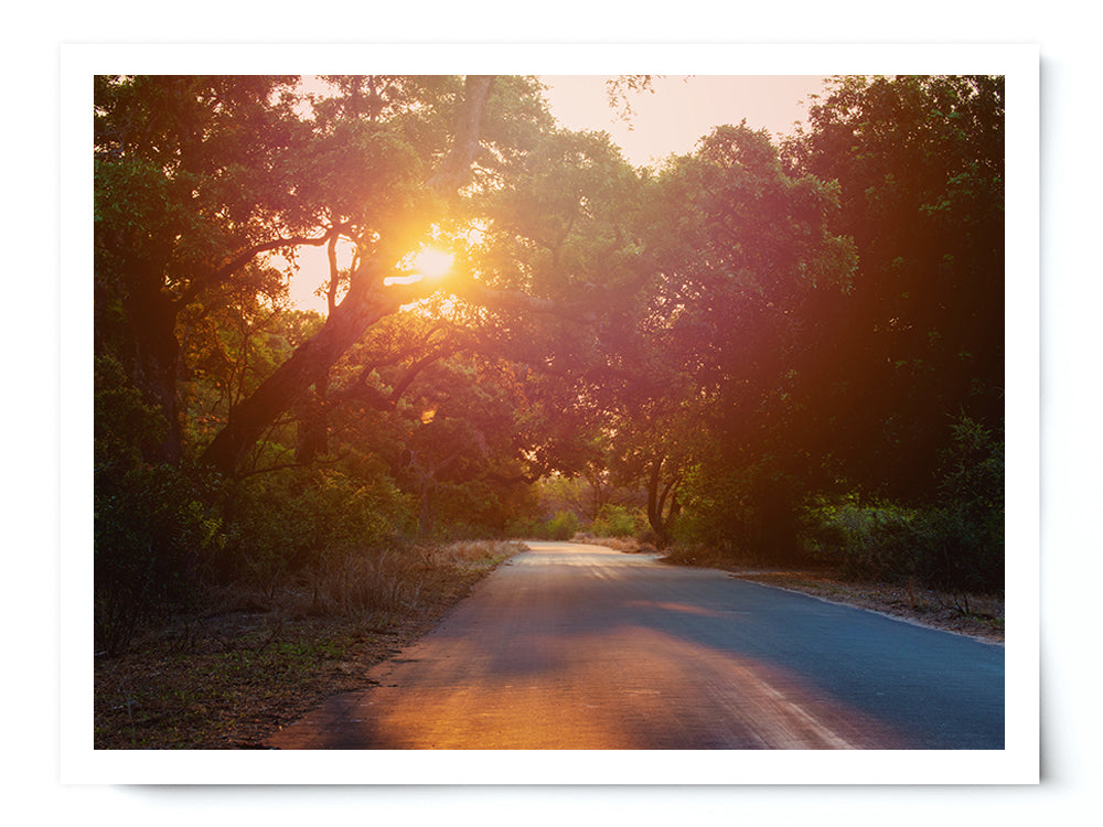 Sunset Forest Road Photo Print