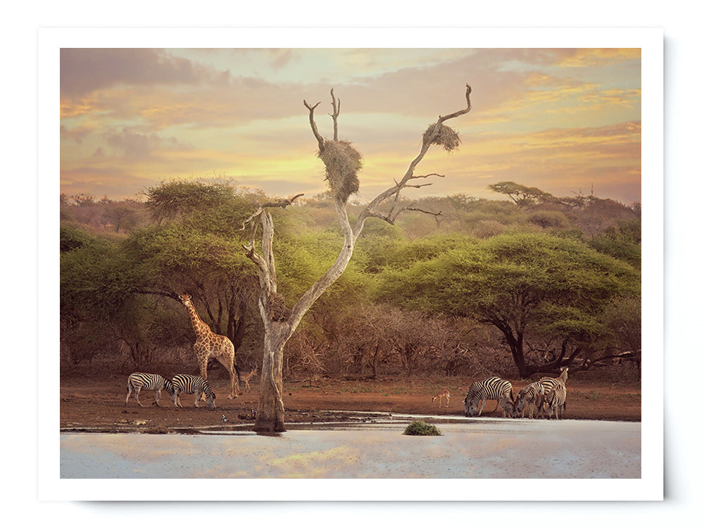 Africa Watering Hole Wildlife Photo Print - Whimsical Wild Artwork
