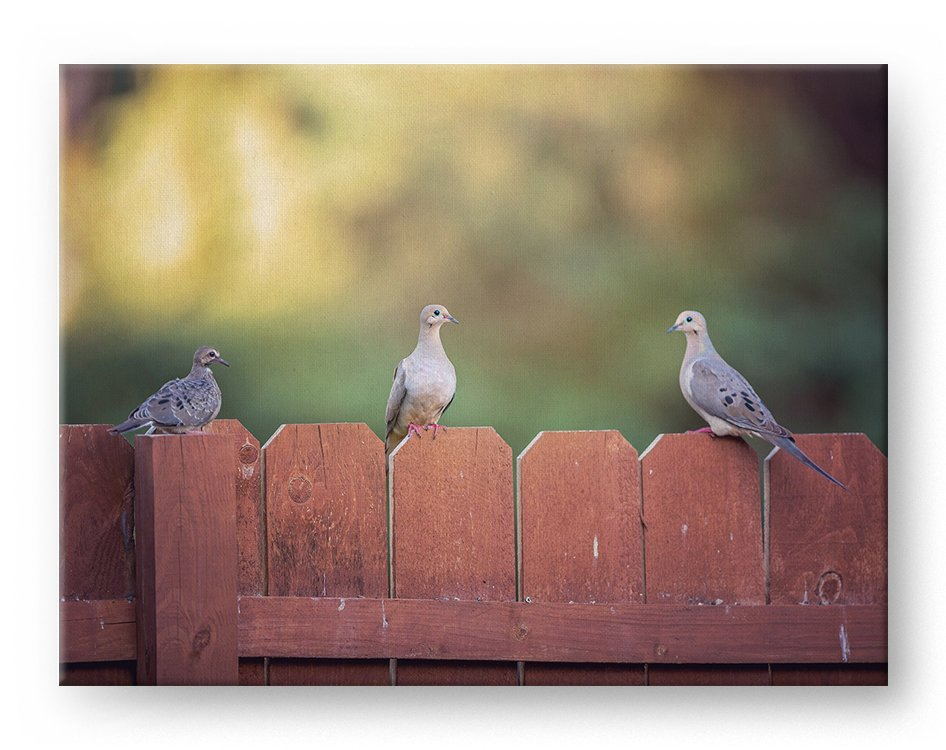 Dove Family Gallery Mounted Canvas Wildlife Photo Print - Whimsical Wild Artwork