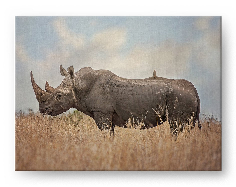 African Rhino Gallery Mounted Canvas Wildlife Photo Print - Whimsical Wild Artwork