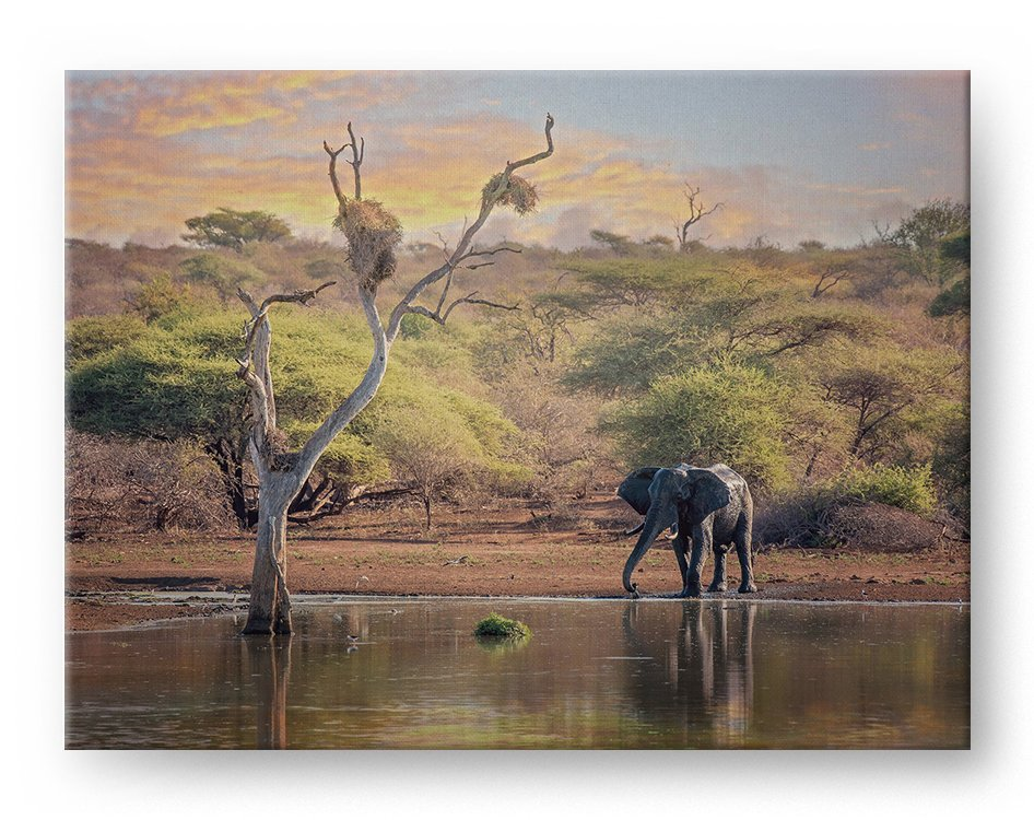 Africa Waterhole with Elephant Gallery Mounted Canvas Wildlife Photo Print - Whimsical Wild Artwork