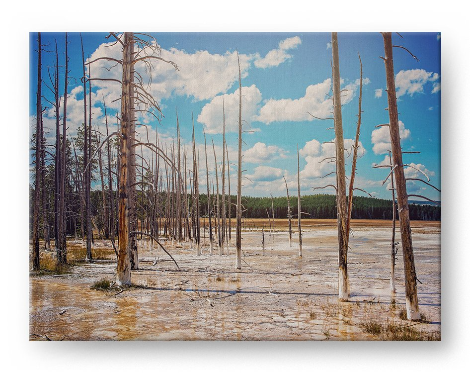 Sulfur Forest Gallery Mounted Canvas Landscape Photo Print