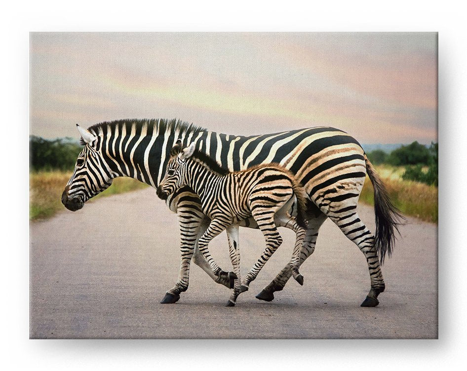 Running Zebras Gallery Mounted Canvas Wildlife Photo Print