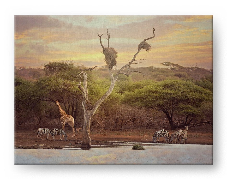 Africa Waterhole Gallery Mounted Canvas Wildlife Photo Print - Whimsical Wild Artwork