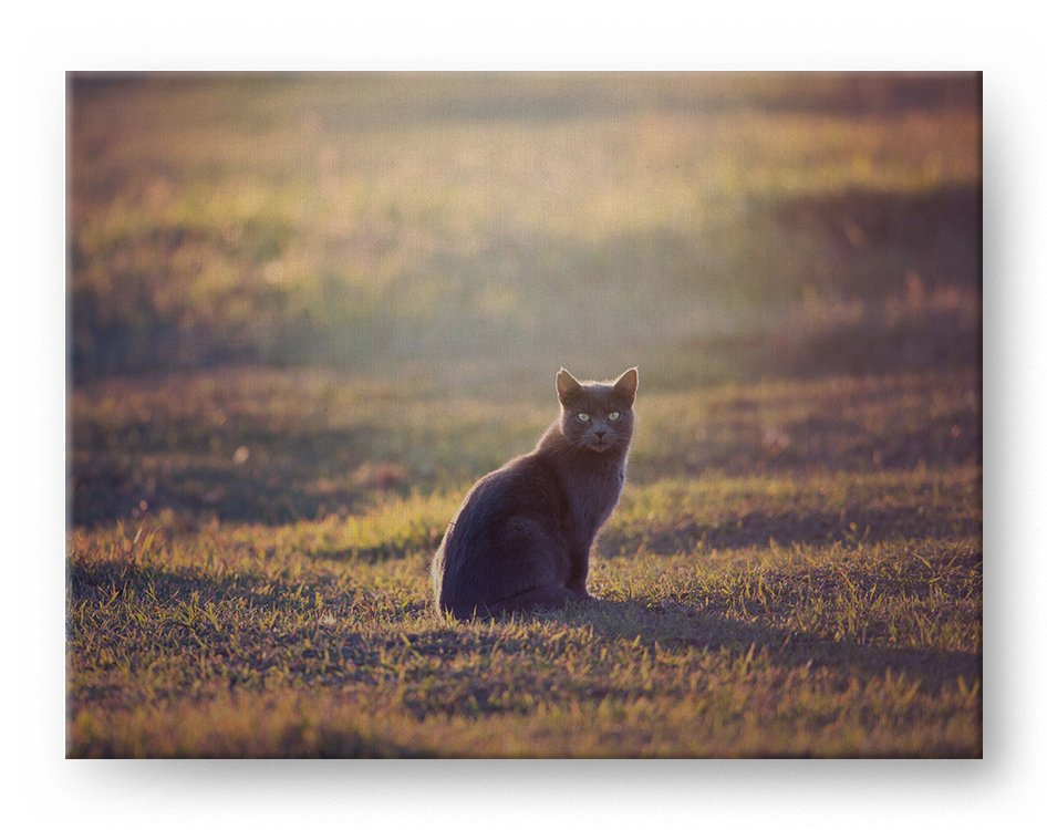 Black Cat Sunset Gallery Mounted Canvas Wildlife Photo Print - Whimsical Wild Artwork