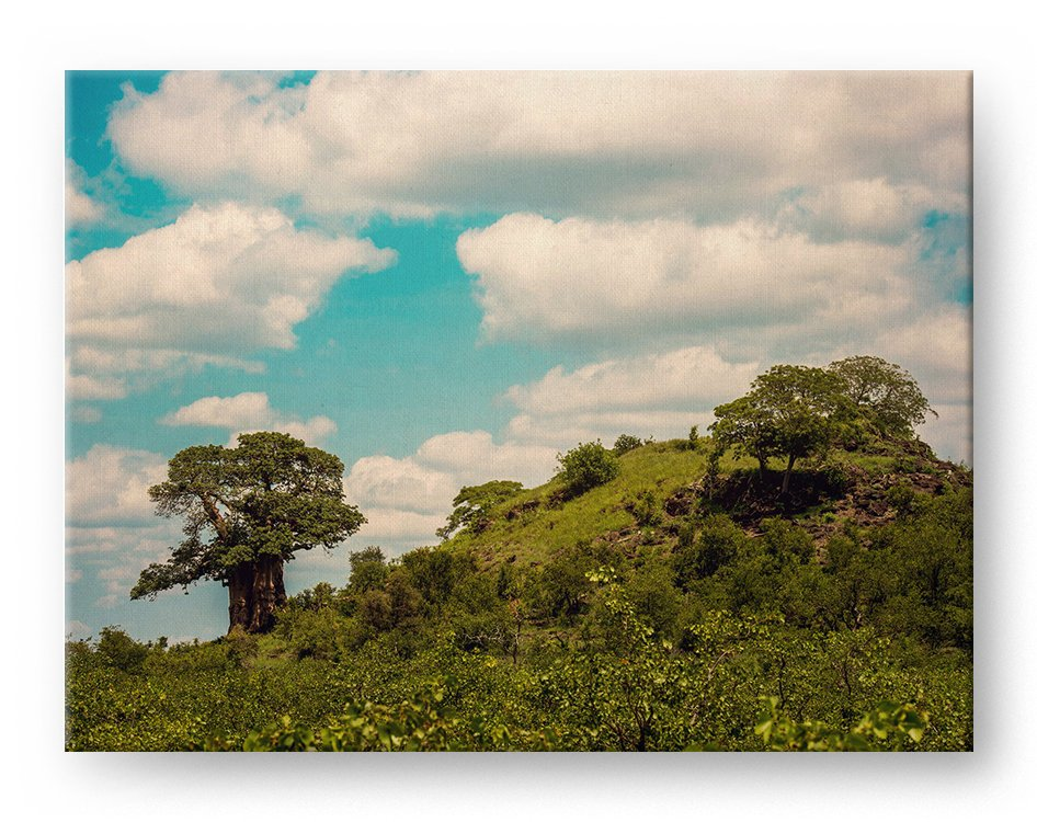 African Baobab Gallery Mounted Canvas Landscape Photo Print - Whimsical Wild Artwork
